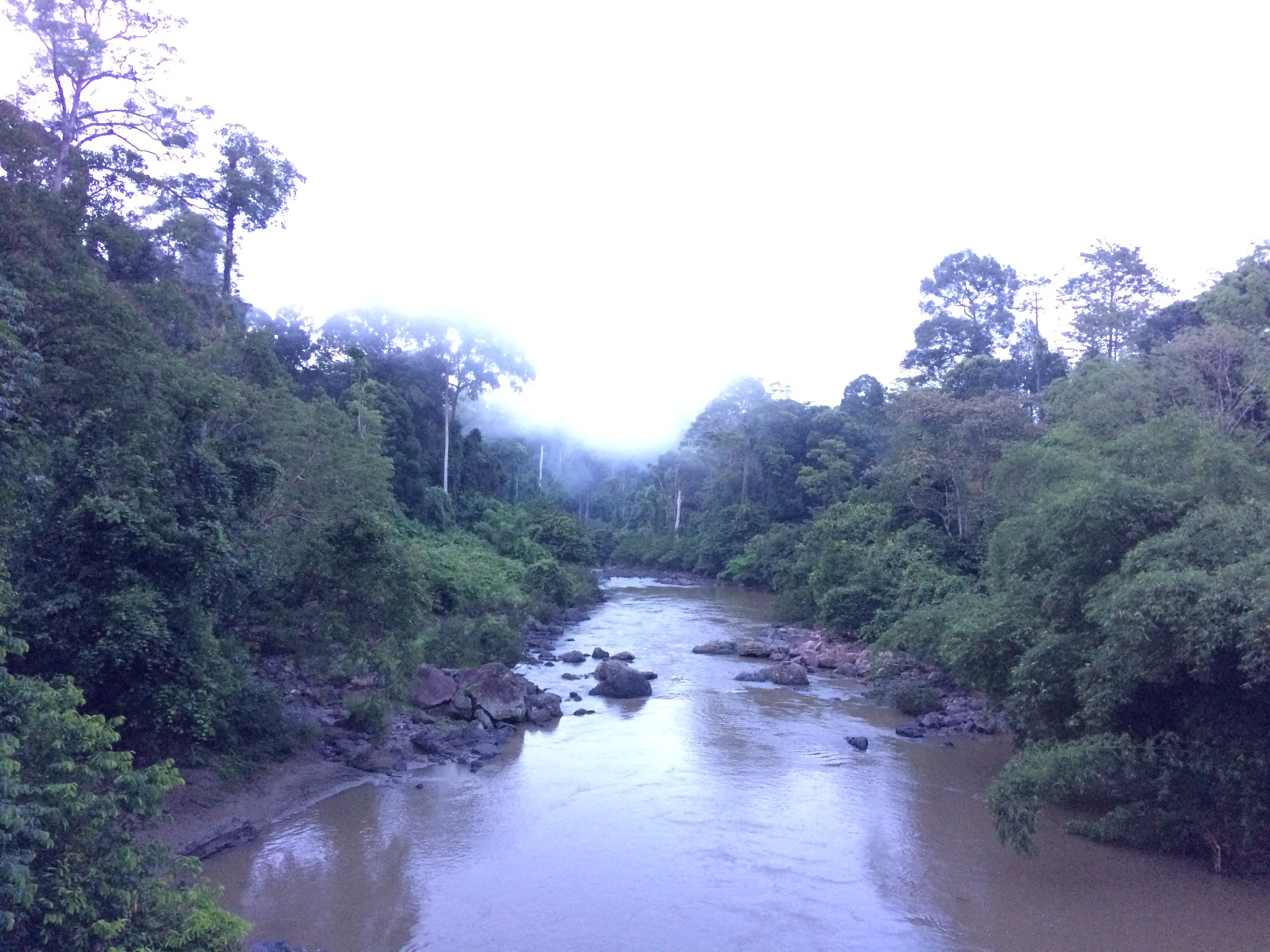 Danum Valley river