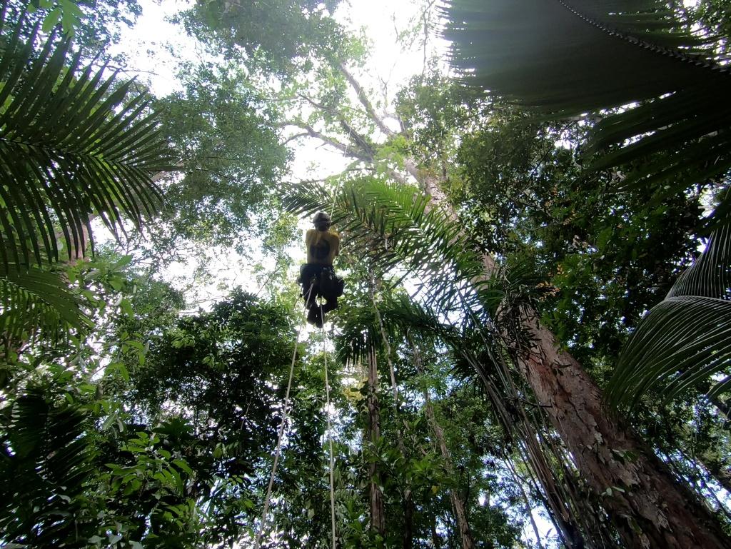 Jari tall tree trip -Fabiano_climbing_00721